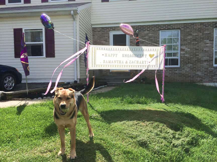 """Zach's dog Penny in front of a """"Congratulations!"""" sign his sister made"""